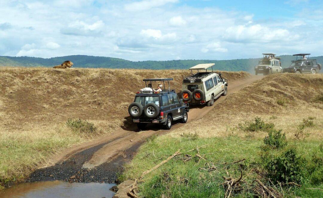 safari en Tanzanie_senior